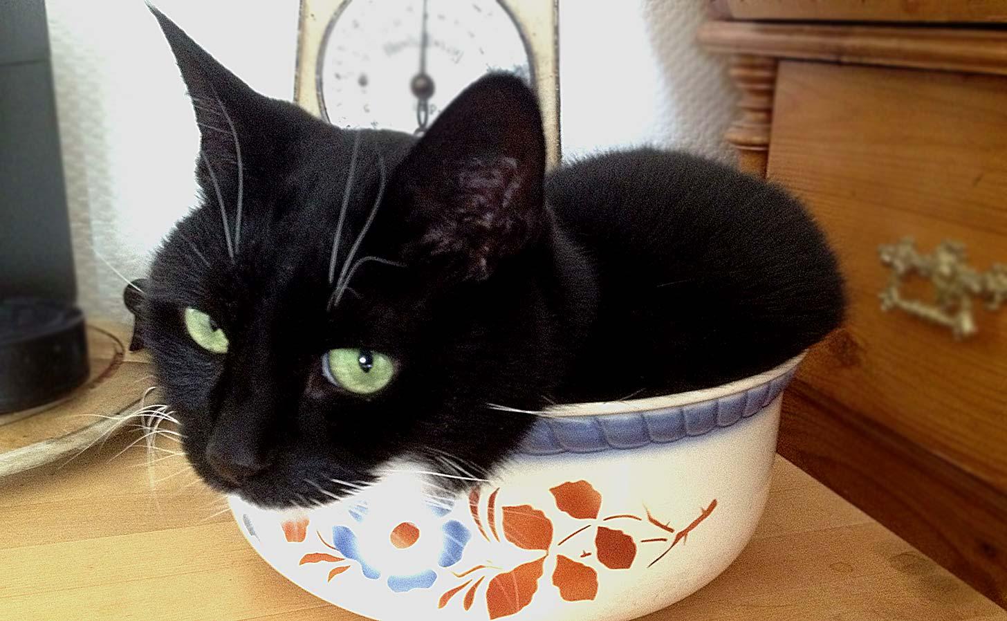 Katt som tagit plats i en fruktskål.
