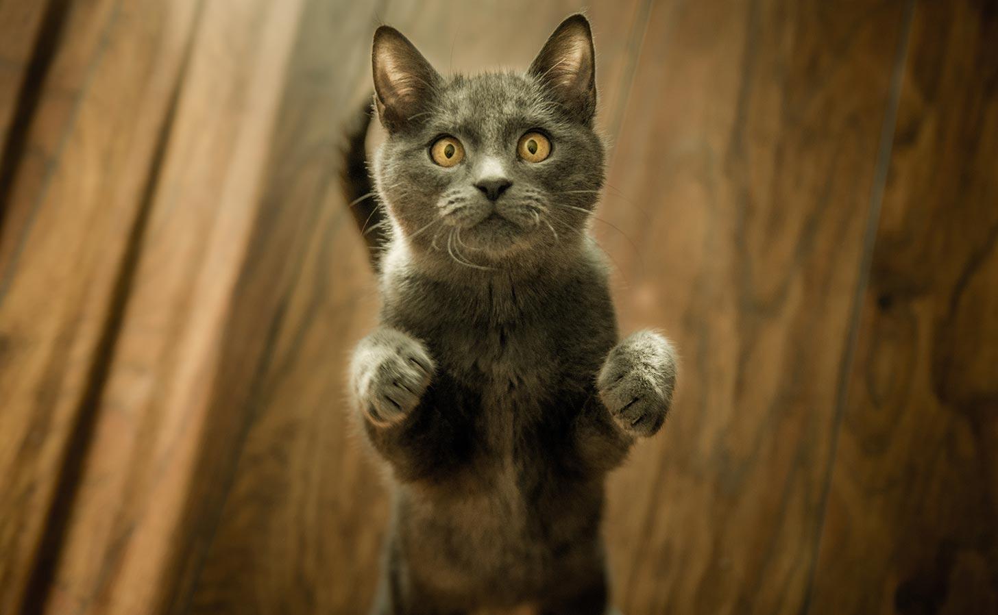 Katter får starkare skydd. Foto: Marko Blažević / Unsplash